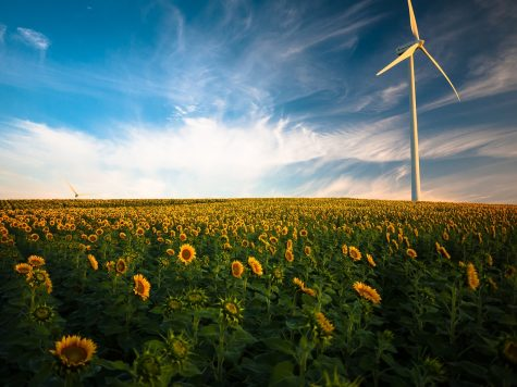 Environmental Club Strives for a Green Future